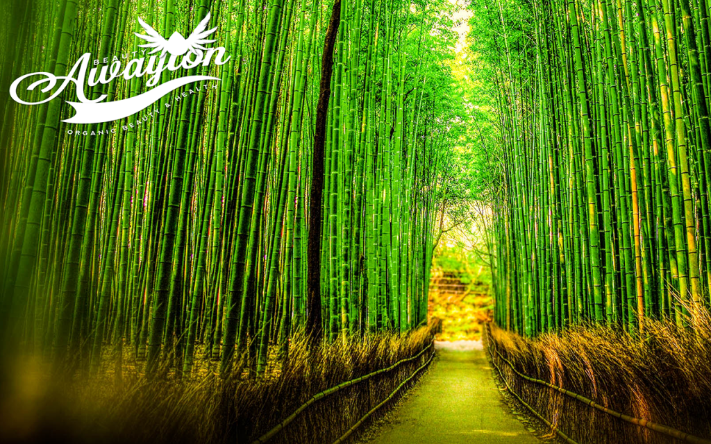 Bamboo Forest by Awayion Beauty