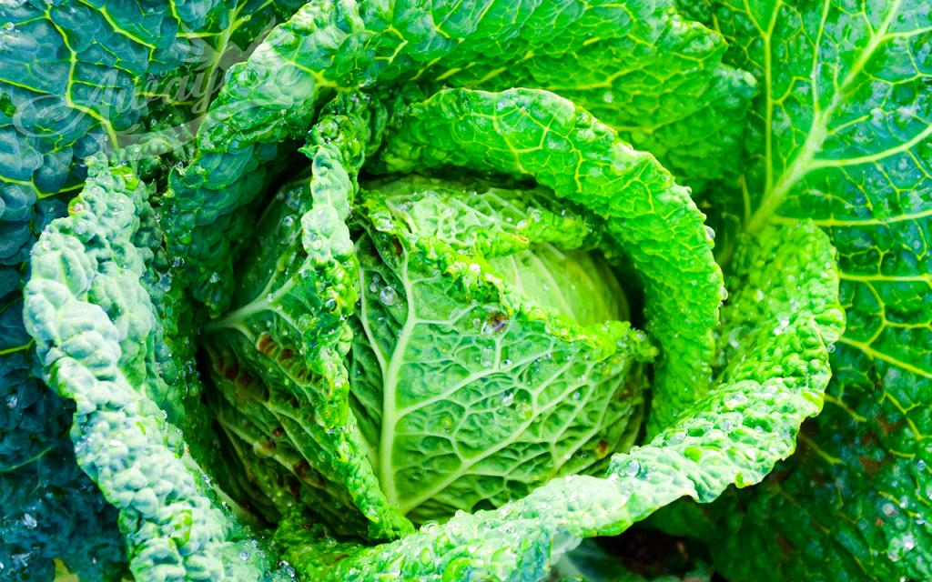 Green Veggies Beat Constipation by Awayion Beauty