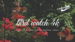 North American Bird ASMR